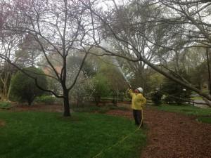 Yard-Tree-2