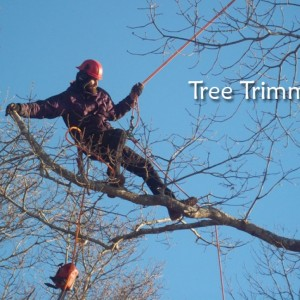 tree trimming-1024x1024