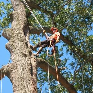 treework-300x300